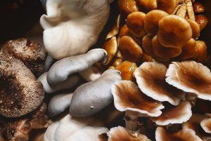Homegrown Mushrooms - Eat Local Foods